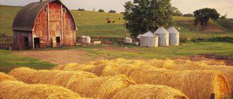 Приватизация земельного участка: с чего начать?