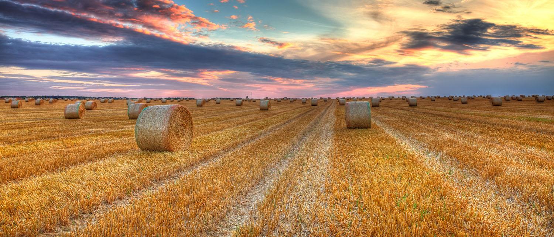 С чего начинать приватизацию земельного участка? Узнайте всё о приватизации земельного участка в собственность — сроки, документы, этапы, цены в нашей статье.